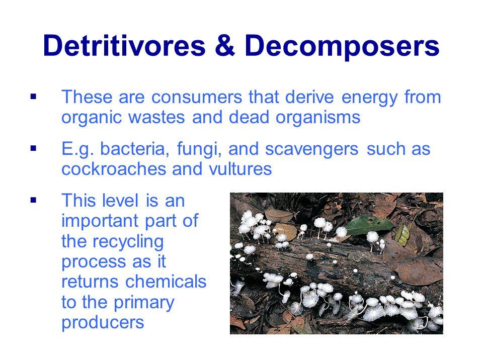 Detritivores & Decomposers