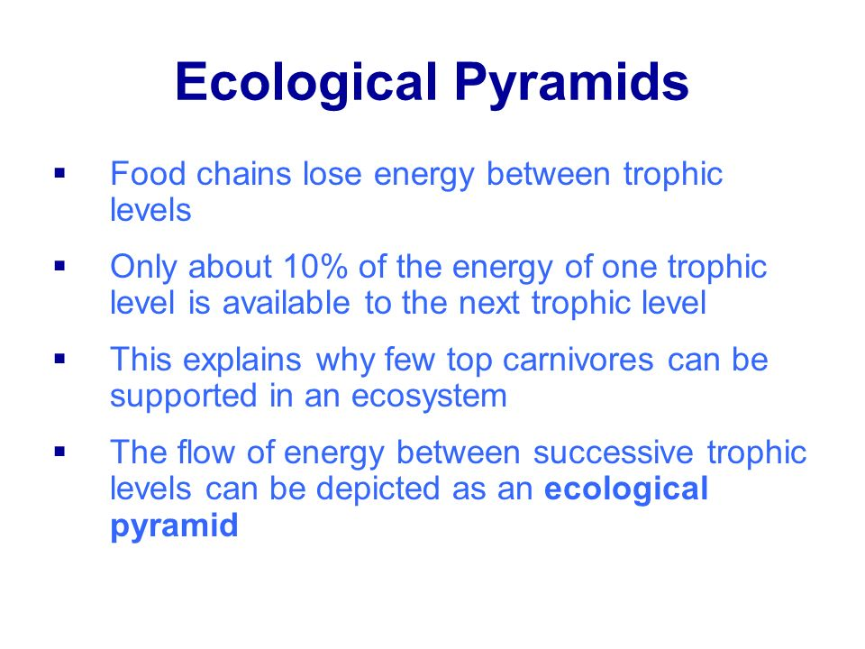 Ecological Pyramids Food chains lose energy between trophic levels