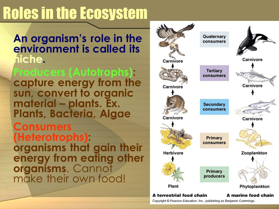 What Are Organisms That Cannot Make Their Own Food Called
