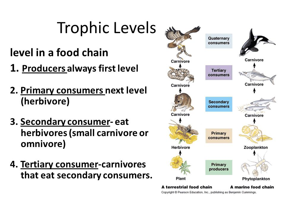 Short essay on Classification of Trophic Levels