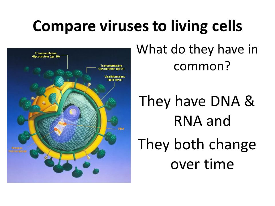 Compare viruses to living cells