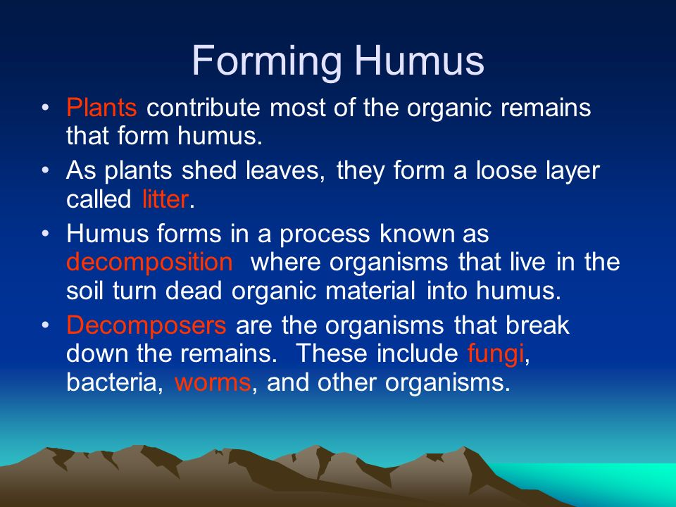 How Soil Forms. - ppt video online download