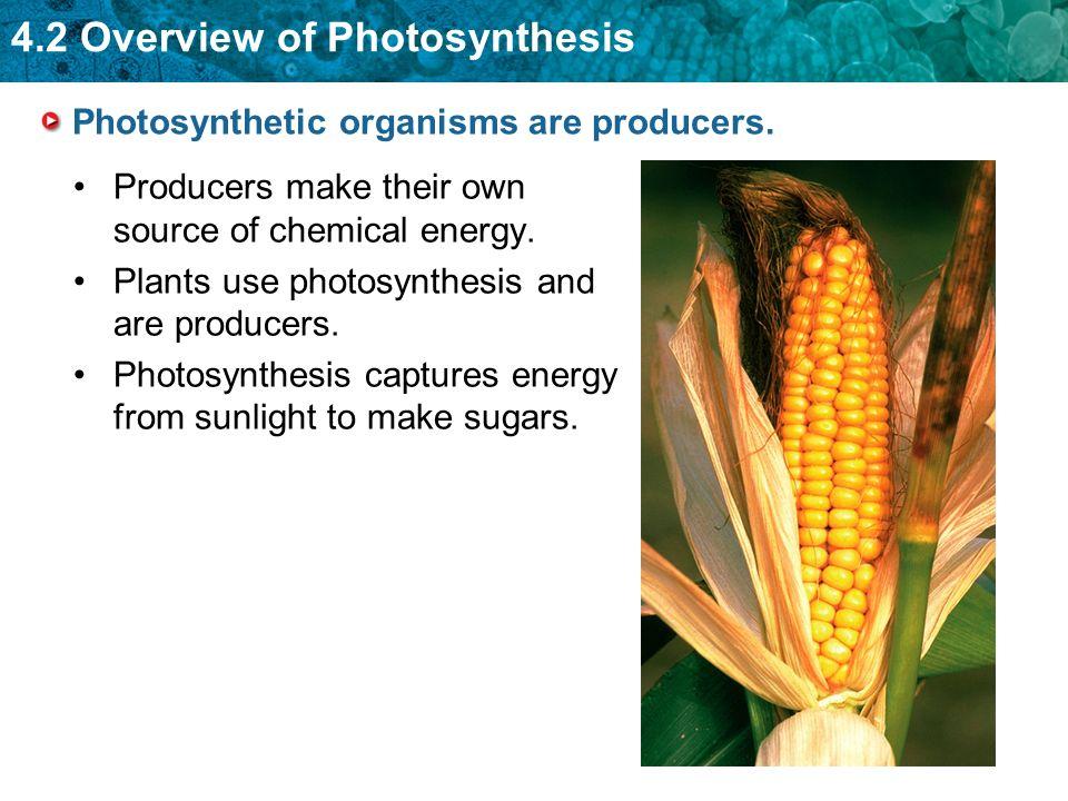 photsynthesis organims
