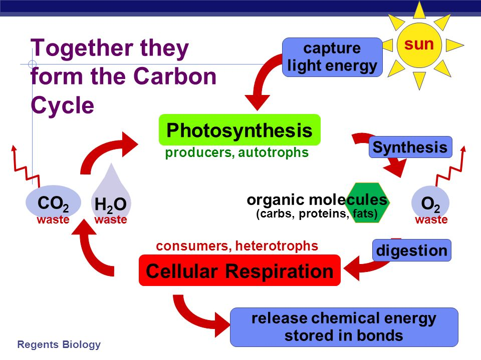 Photosynthesis Glucose Oxygen Co2 H2o O2 Light Energy