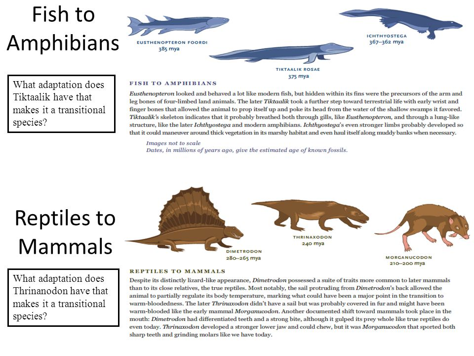 Fossil identification ppt video online download for Are fish mammals