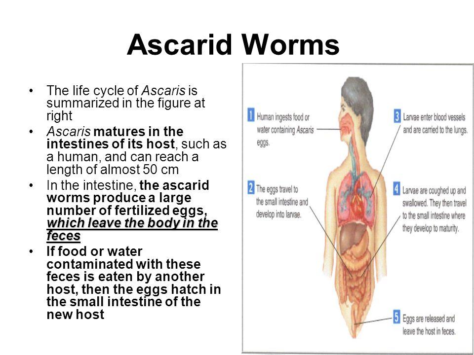 Anatomy of a razor clam 3846892 - follow4more.info
