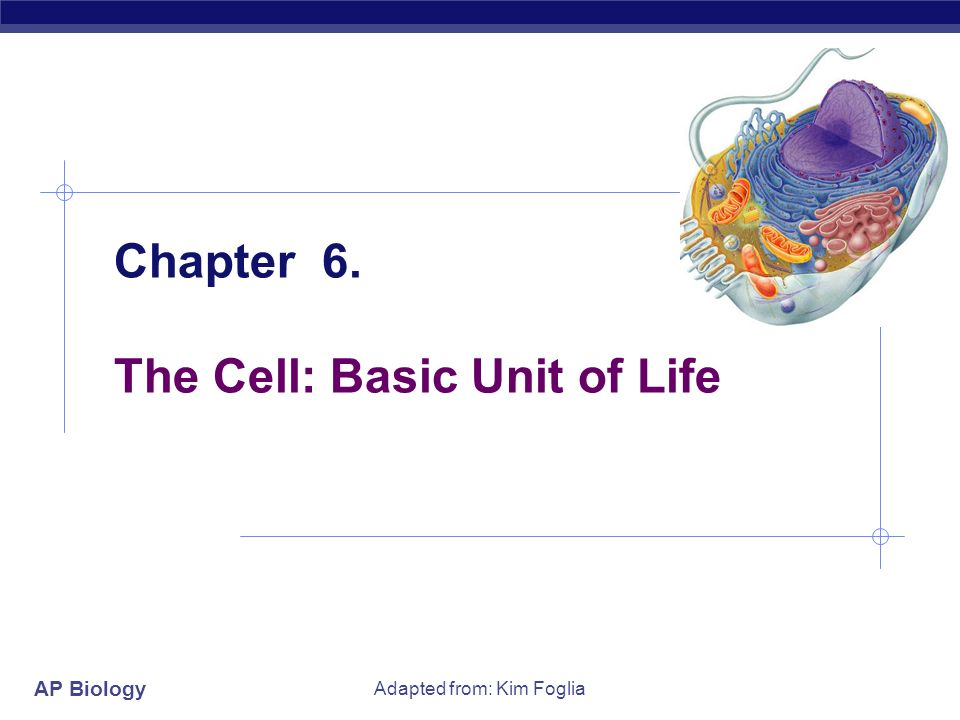 why is the cell the basic unit of life Cells are called the basic unit of life because, all living thingscome from other living things cells are called the basic units of life, because.