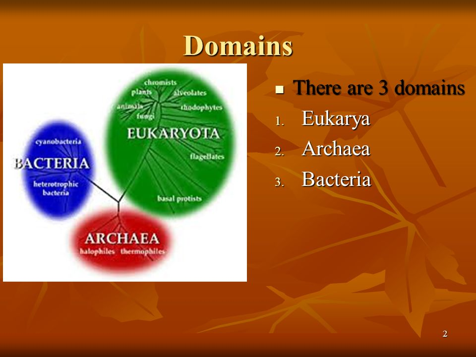 Domains There are 3 domains Eukarya Archaea Bacteria