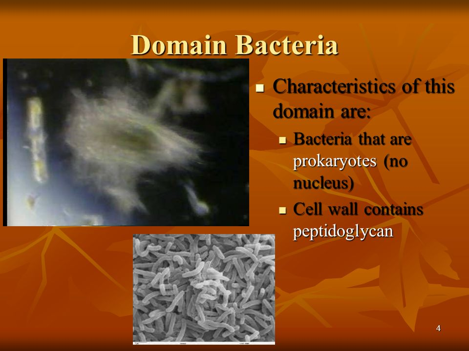 Domain Bacteria Characteristics of this domain are: