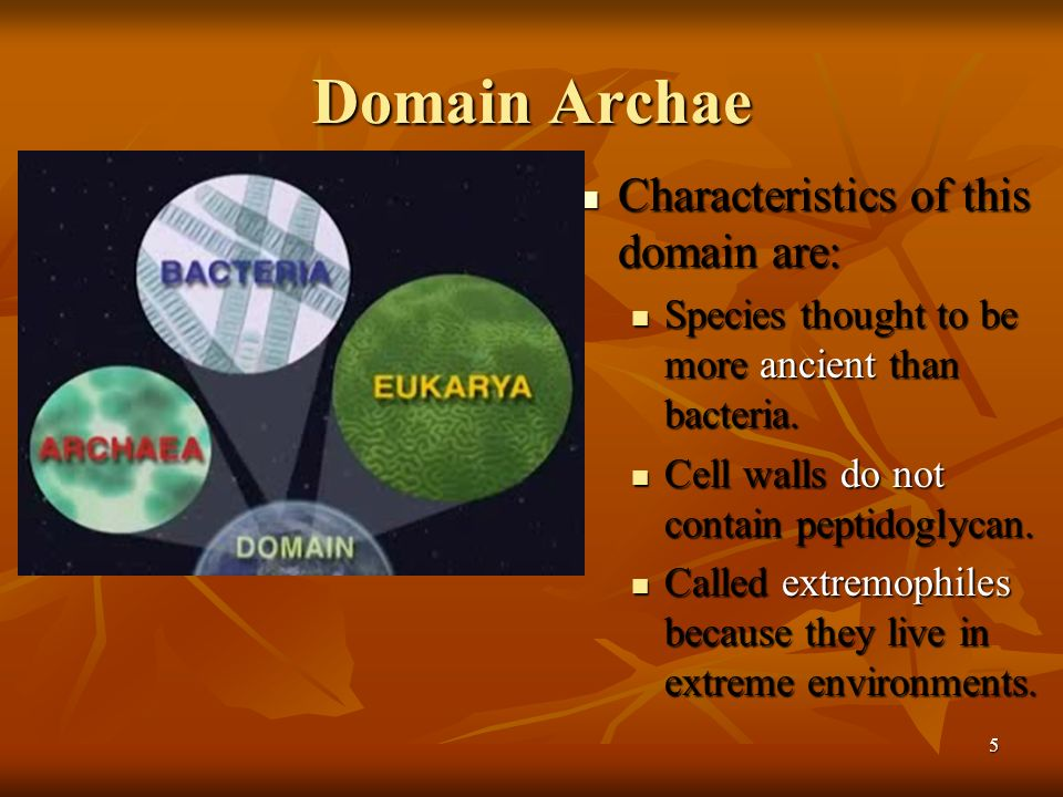 Domain Archae Characteristics of this domain are: