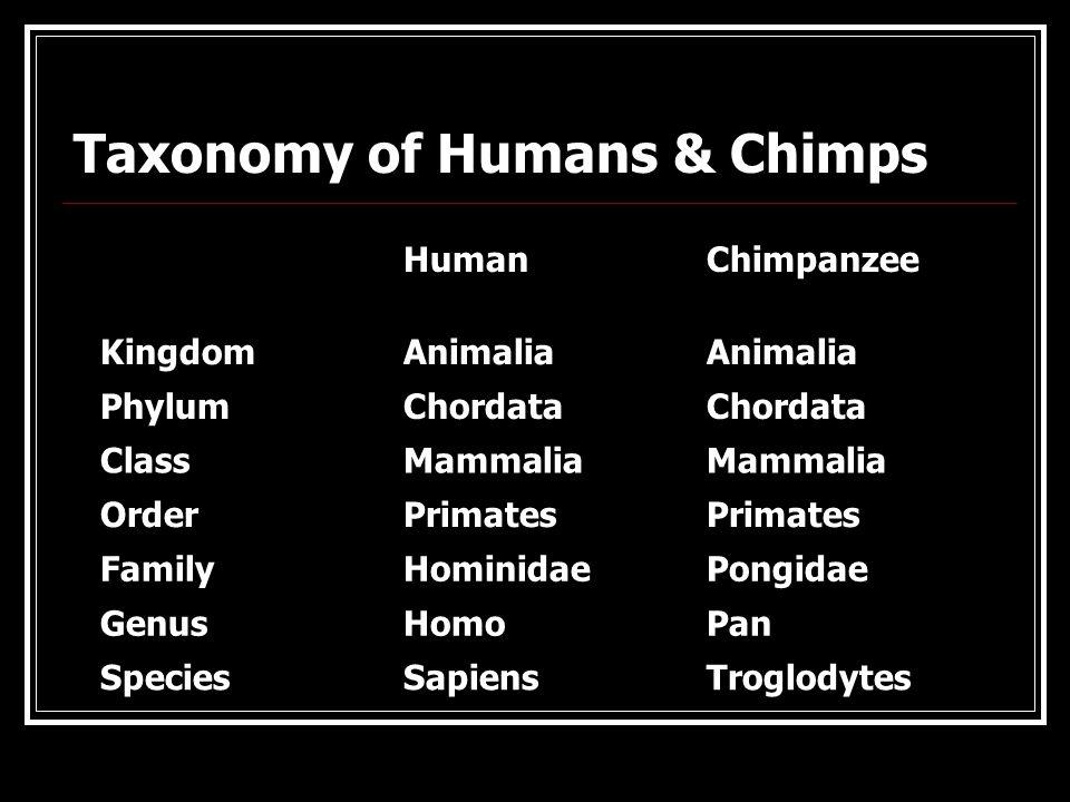 Chimpanzee Taxonomy The Primates. -...