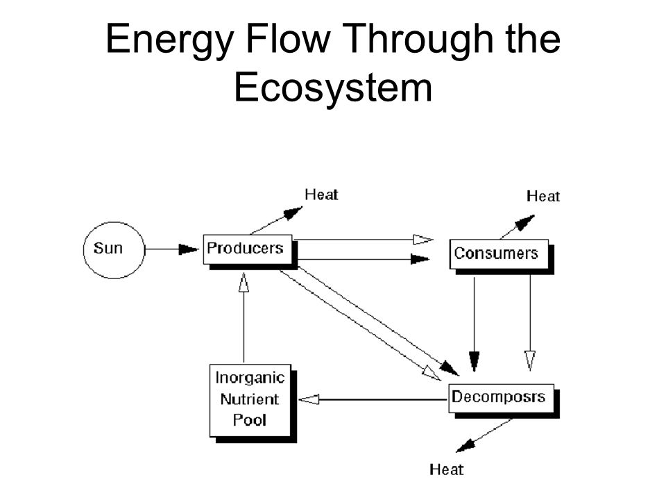 moving energy and nutrients through ecosystems