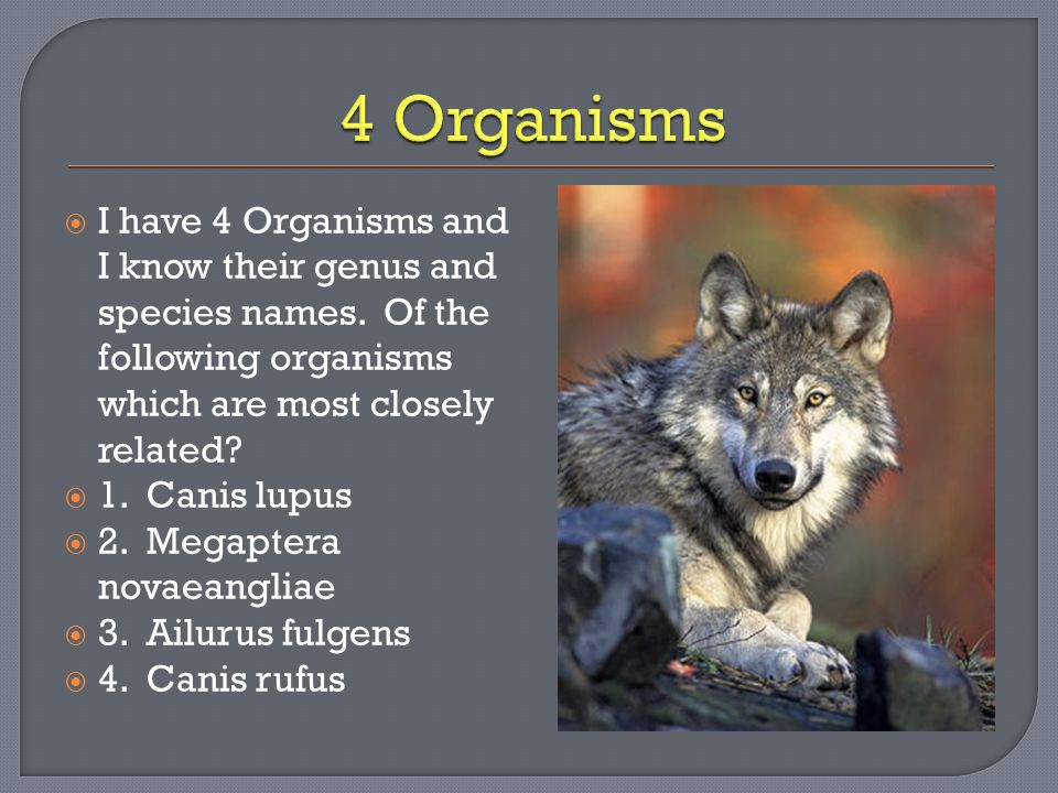 4 Organisms I have 4 Organisms and I know their genus and species names. Of