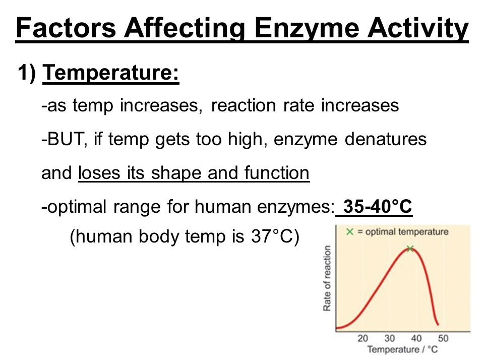 factors that affect enzyme activity Factors affecting enzyme activity the activity of an enzyme is affected by its environmental conditions changing these alter the rate of reaction caused by the enzyme.
