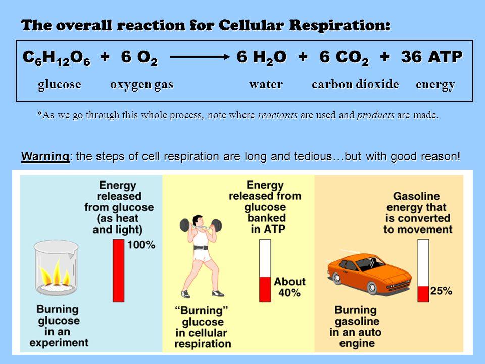 Cellular Respiration. - ppt video online download