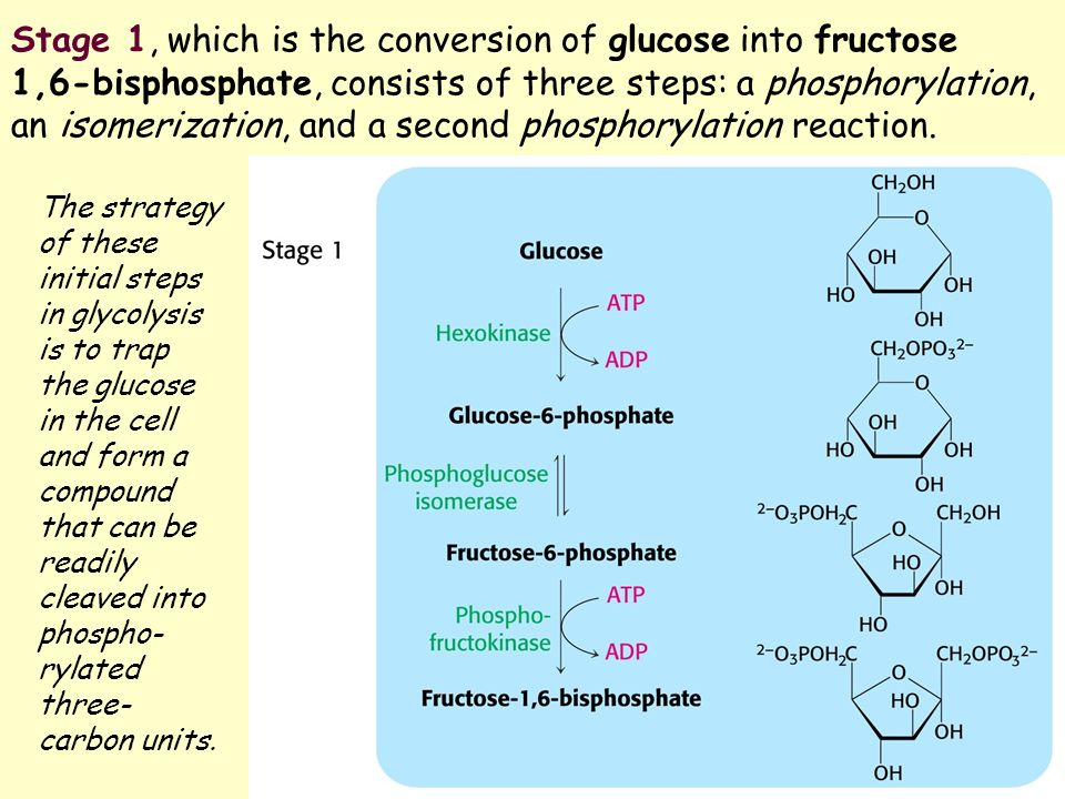 gluconeogenesis fructose 1 6 bisphosphatase deficiency Fructose-1,6-bisphosphatase deficiency is an autosomal recessive disease that results in disordered gluconeogenesis it is a genetically heterogeneous disorder that affects females more than males (15:1.