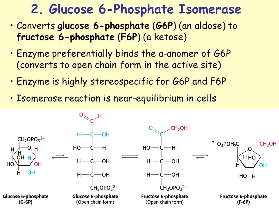 Fructose 6 Phosphate Glycolysis METABOLISM OF CARBOHYD...