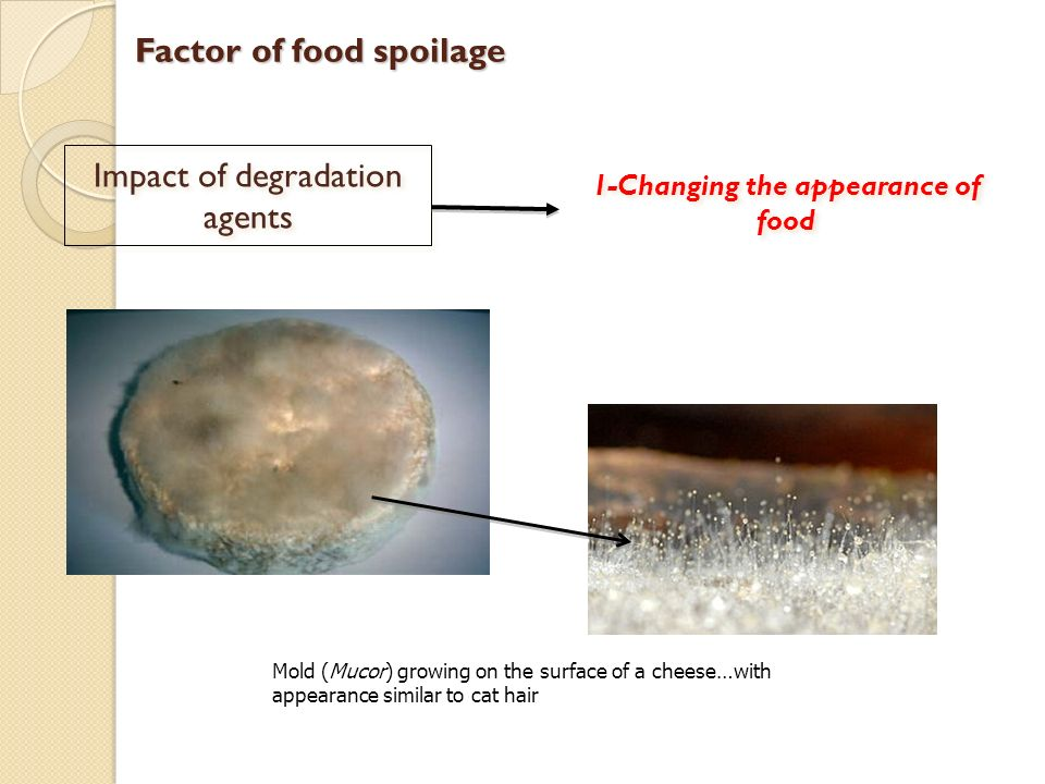 agents of spoilage Introduction to the microbiology of food  etiologic agent incubation period  spoilage can occur either during the fermentation period or upon storage of the .