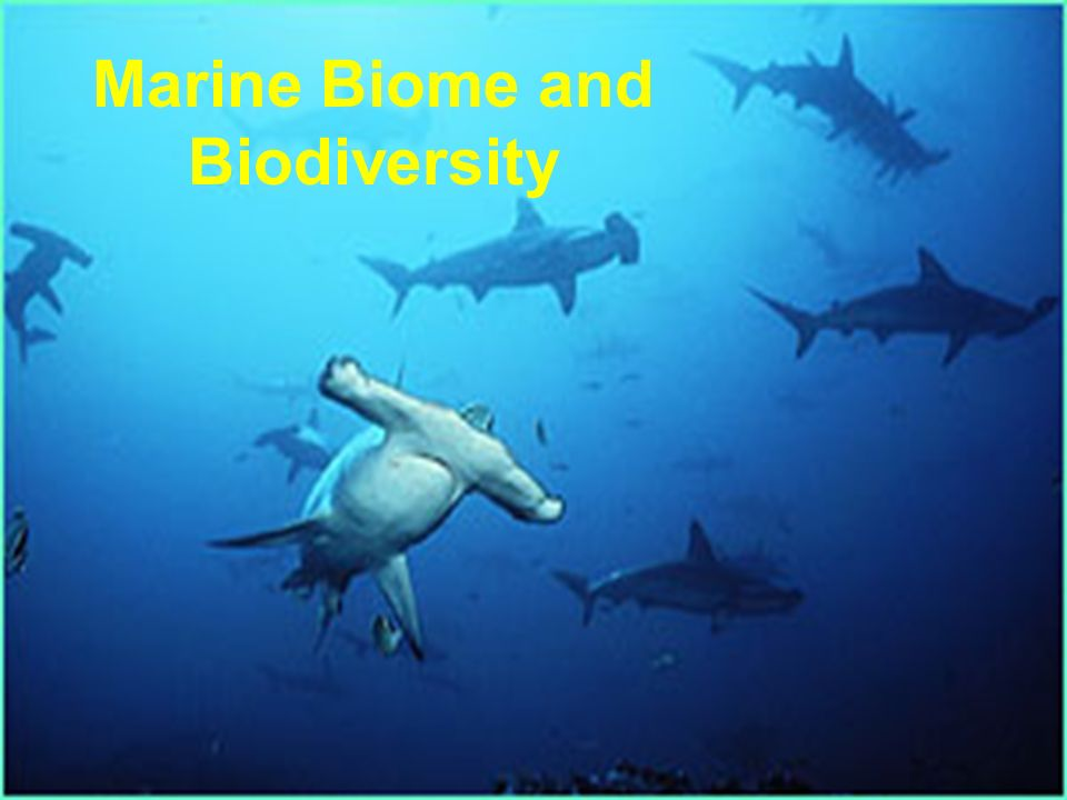 marine biome and biodiversity ppt video online download