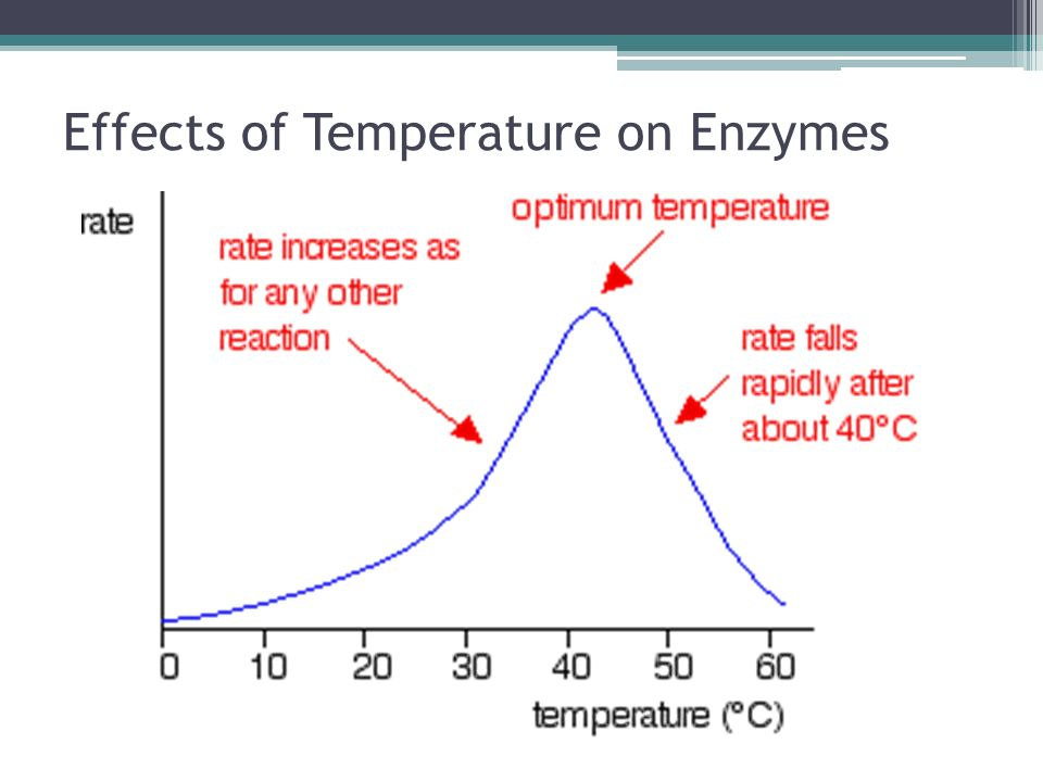 biochemistry effect of temp on When observing the effects of substrate concentration on enzyme activity the following variables must be kept constant ph, temperature and enzyme concentration the effect of substrate concentration can be illustrated by using either line weaver burk plot (equation) or michaelis-menten graph (equation.