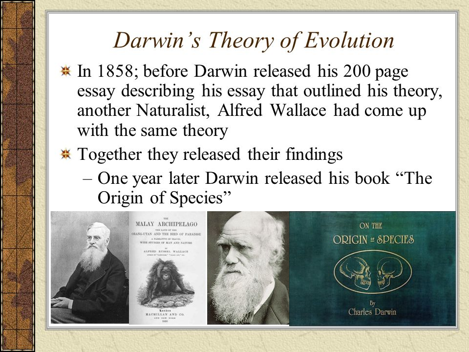 essay on charles darwin theory of evolution More charles darwin essays: origin of the species a discussion of charles darwin's theory of evolution and how it has overcome the trials and tribulations of time.