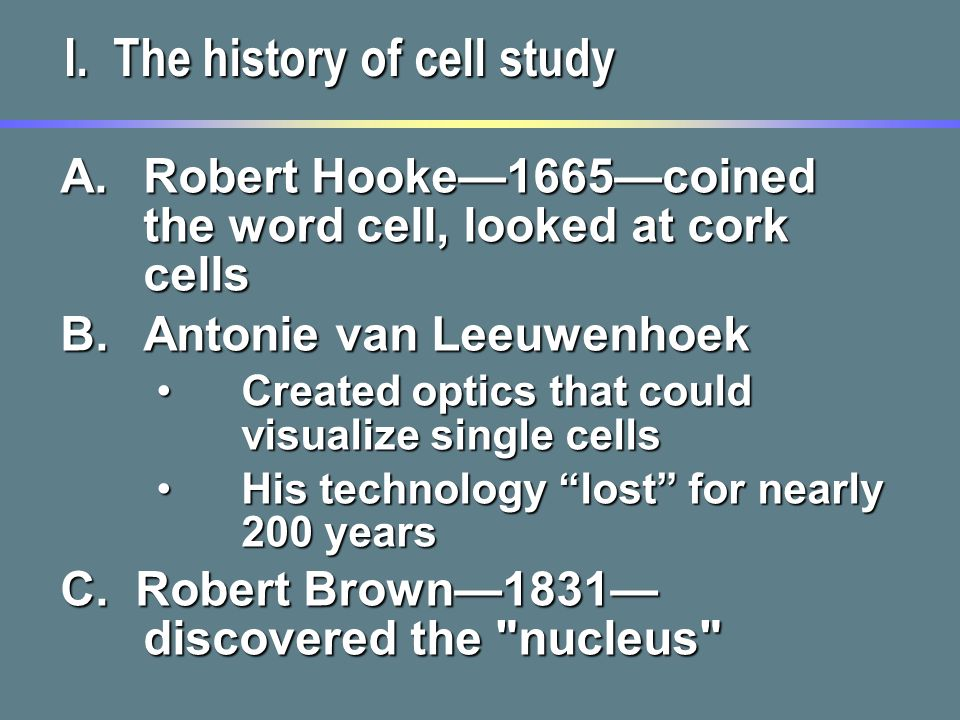 history structure and function of the nucleus Structure and function of the nucleus the nucleus was the first organelle to be discovered in 1632 by antonie van leeuwenhoek who was a microscopist he observed the nucleus in red blood cells of salmon.