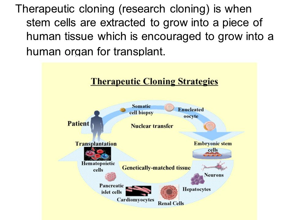 thesis on therapeutic cloning In this case, therapeutic cloning is that employed in order to cure a particular disorder (wobus, 2008) for example, therapeutic cloning can be applied in an organ replacement, for instance, skin generation for burnt victims.