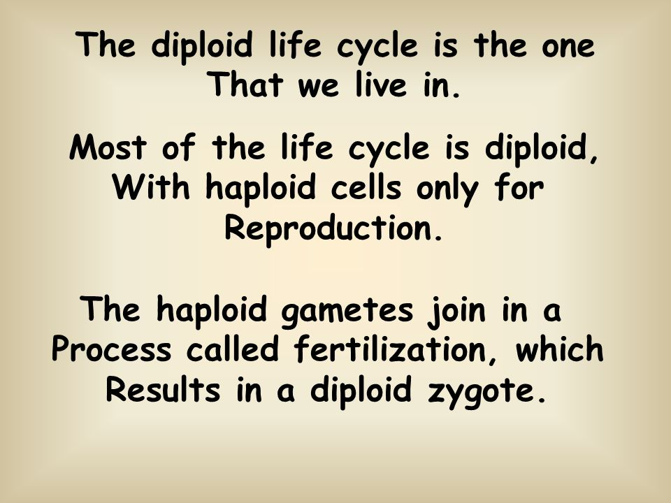 Chapter 7 Meiosis. - ppt download