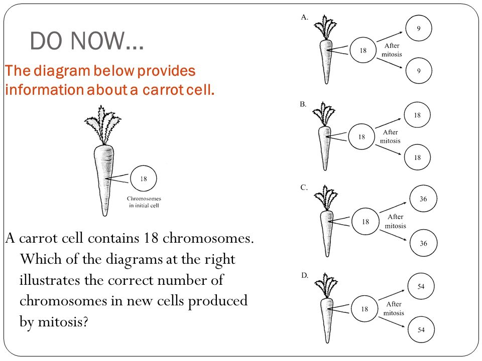 Mitosis diagram numbers all kind of wiring diagrams do now the diagram below provides information about a carrot cell rh slideplayer com mitosis and meiosis diagram chromosome diagram ccuart Images