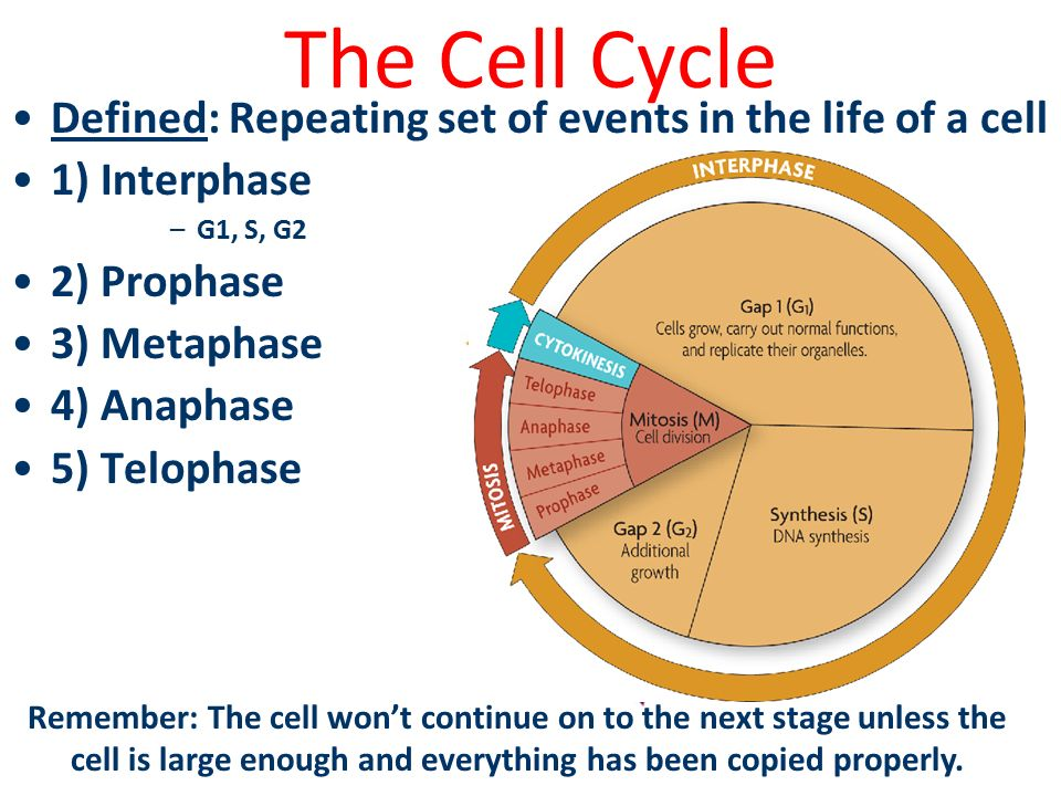 cell life How do you know that the cells in your body are alive question date: 2008-12-16: answer 1: this is a great question, for many reasons in essence, you are asking the question of what is life.