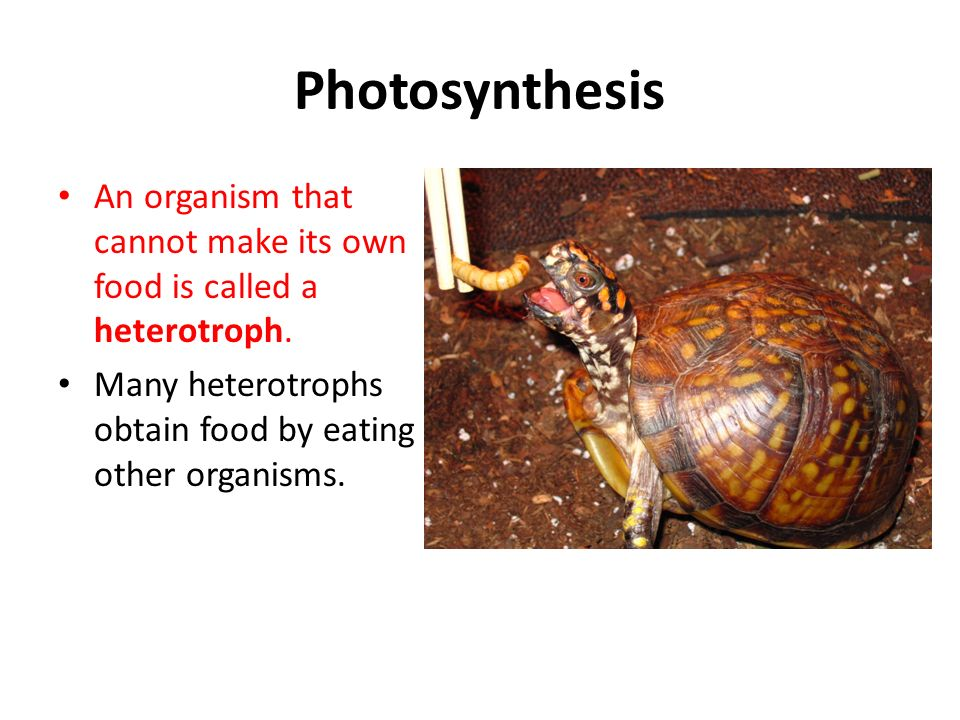 What Is An Organism That Makes Their Own Food Called