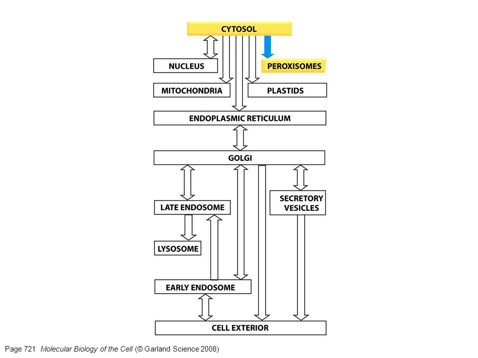 Page 721 Molecular Biology of the Cell (© Garland Science 2008)