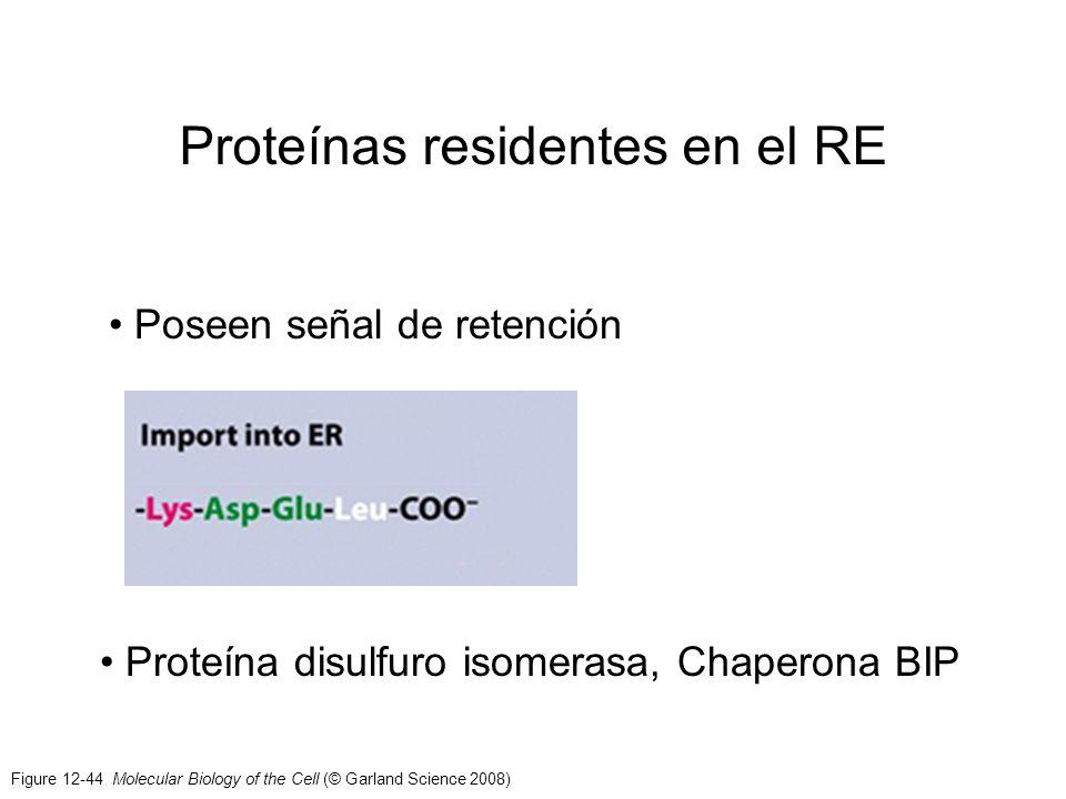 Proteínas residentes en el RE