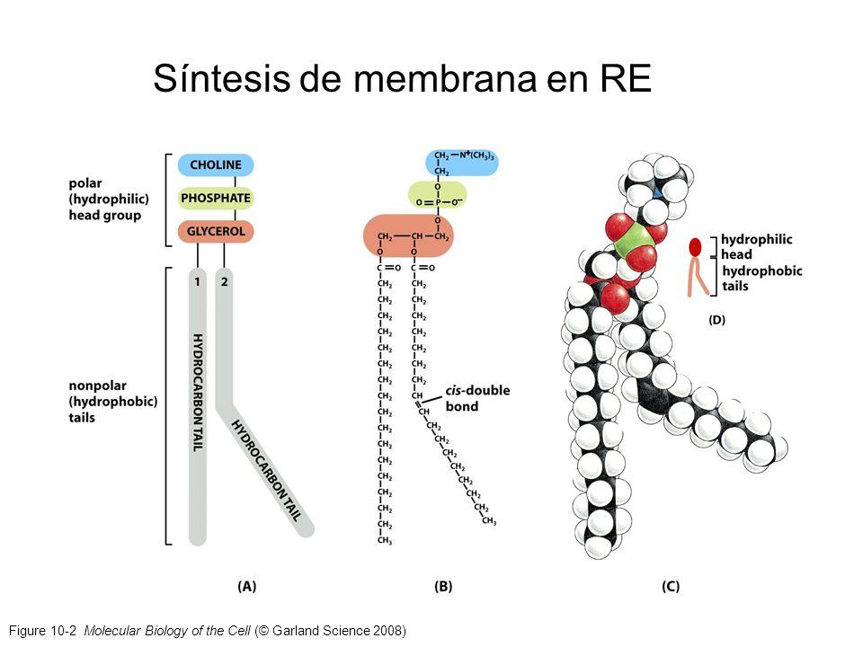 Síntesis de membrana en RE