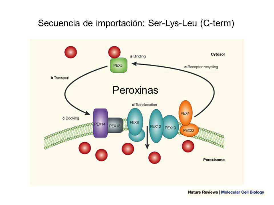 Secuencia de importación: Ser-Lys-Leu (C-term)