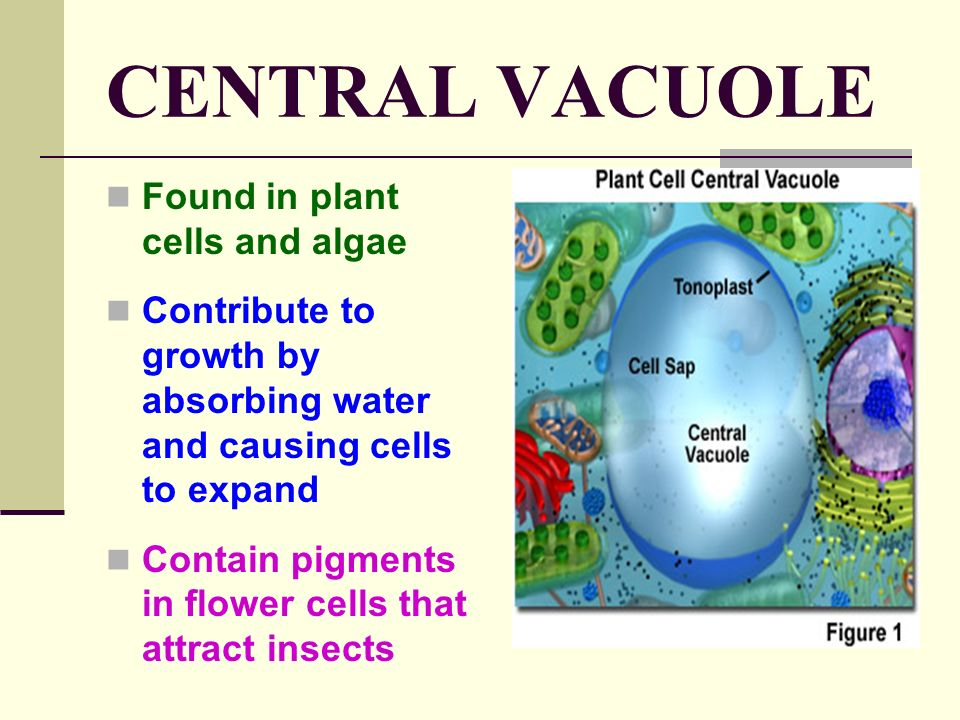 ALL ORGANISMS ARE MADE OF CELLS - ppt video online download