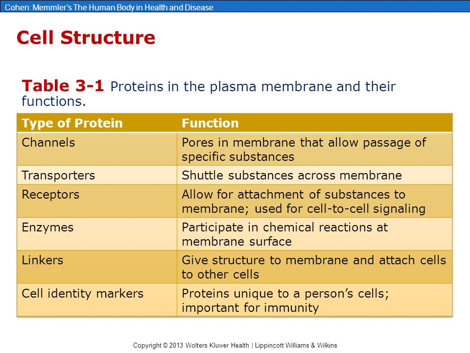 proteins and their functions There are three major categories of plasma proteins, and each individual type of proteins has its own specific properties and functions in addition to their overall collective role: albumins , which are the smallest and most abundant plasma proteins.