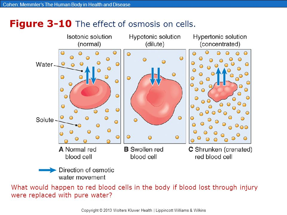 the effect of osmosis on the This resource guide on osmosis will illustrate how important this process is to  pdf concentration gradient – this site states the effect of the concentration.