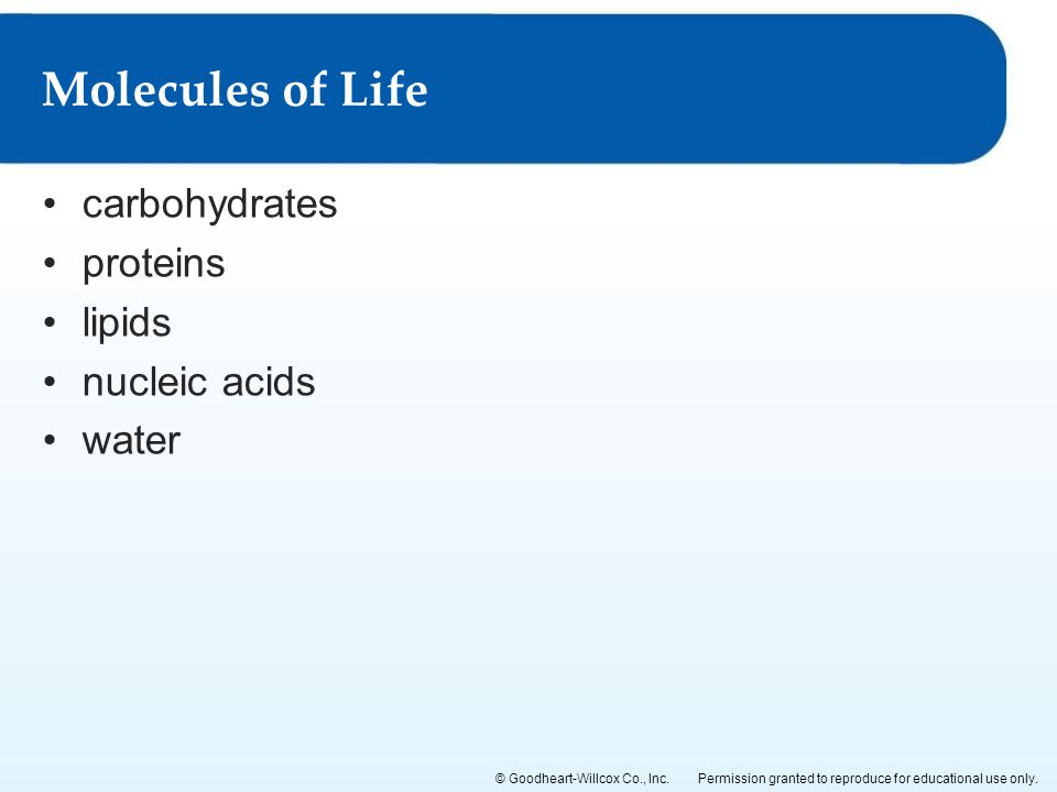 Cells and Tissues 2 Lesson 21 Molecules of Life Lesson 22 – Molecules of Life Worksheet