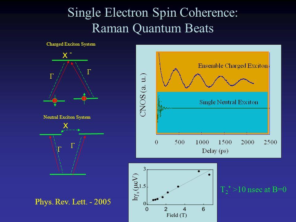 Single Electron Spin Coherence: Raman Quantum Beats