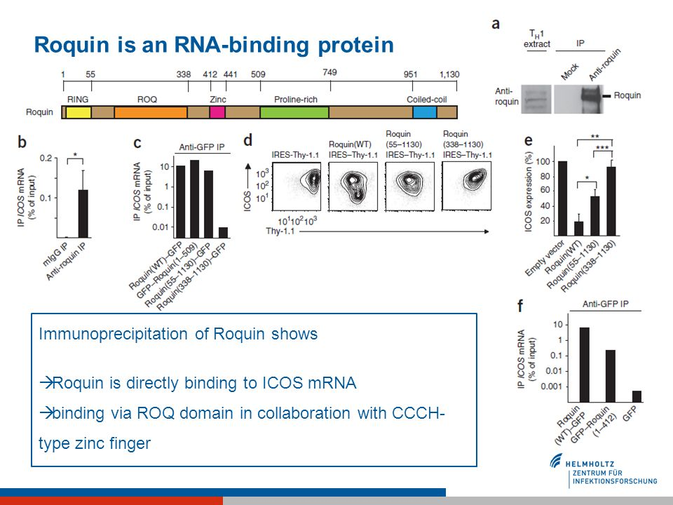 Roquin is an RNA-binding protein