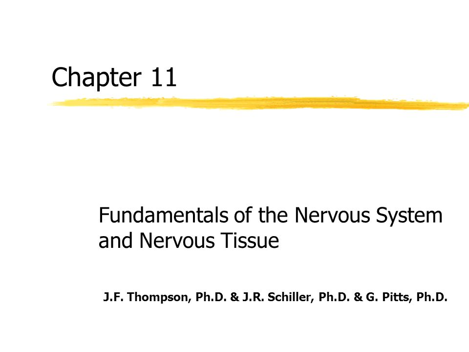 Chapter 11 Fundamentals of the Nervous System and Nervous Tissue ...