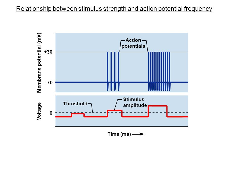 relationship between rms and amplitude