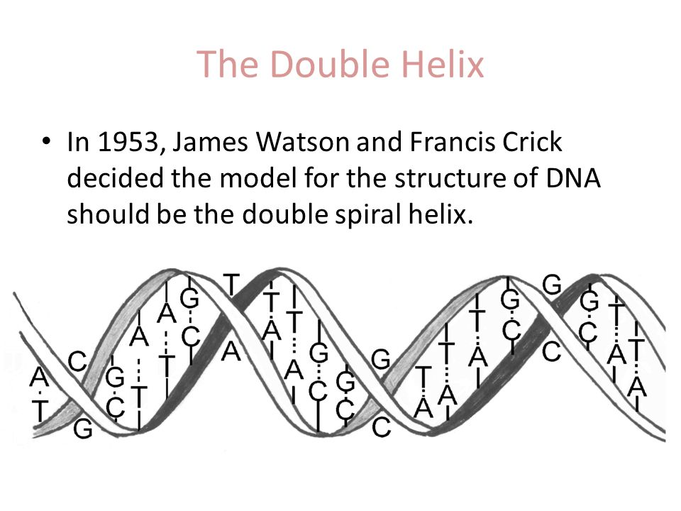 the double helix by james watson essay James d watson was the co discoverer of the double helix james came about the discovery of the double helix though the work left by others trying to solve this mystery the had work from two others, erwin chargaff rule that a only links with t and c only links with g and rosalind franklin's x-rays double helix.