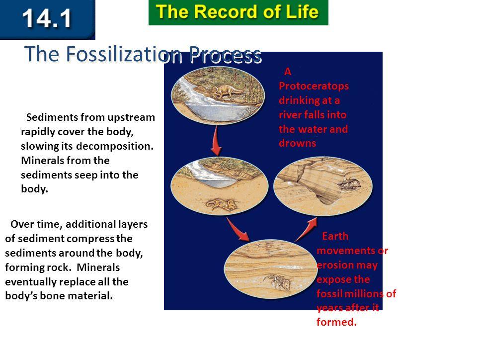 Radiometric dating igneous rock provides 9