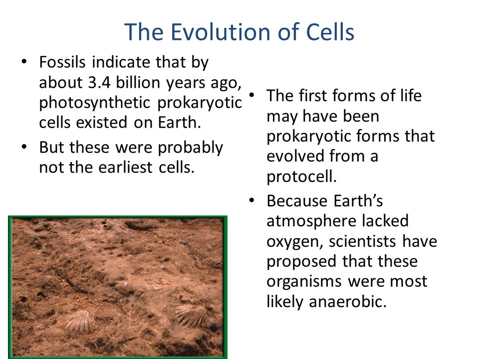prokaryotic cells existed for about two billion years Instructor's manual biology  • state that fossil evidence shows the earliest prokaryotes existed at least 34 billion years  • know that prokaryotic cells.
