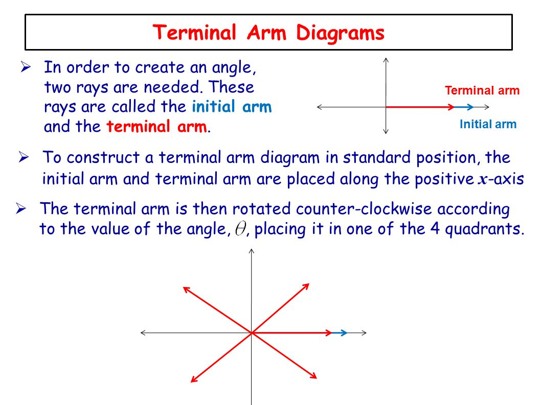 Lesson 3 introducinge cast rule ppt video online download terminal arm diagrams in order to create an angle two rays are needed these pooptronica Choice Image