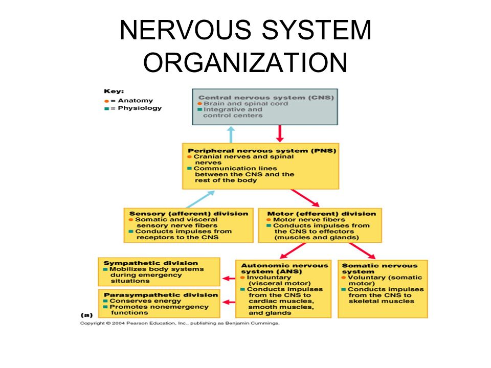 systems and organization
