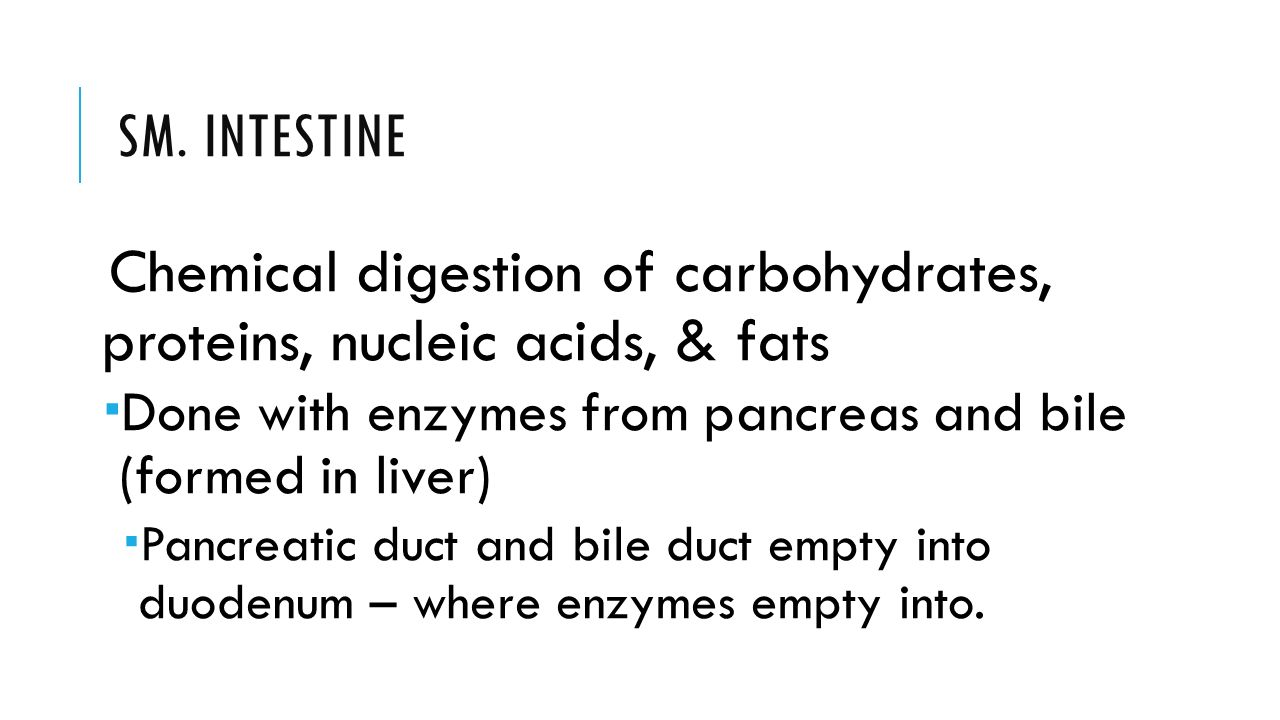 digestive system. - ppt download, Cephalic Vein