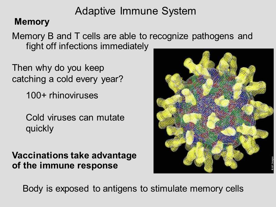 Lecture 13 Ch 43 Immune System Ppt Download